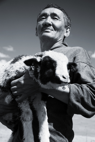 shepherd21